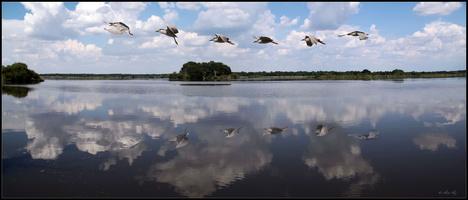 Reflet du Bihoreau sur l'étang