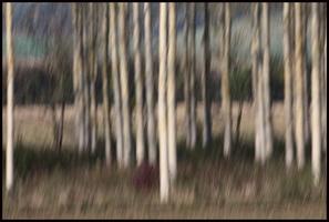 filé sur des arbres